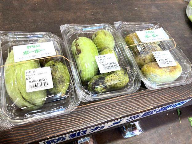 幻の果物ポポーといろんな種類のメダカ販売中